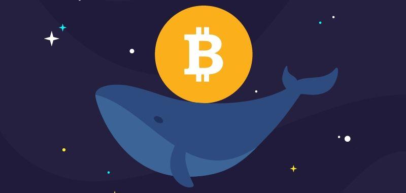 , The crypto whale tactics: think and trade as one of them, Part 3, Forex-News, Forex-News