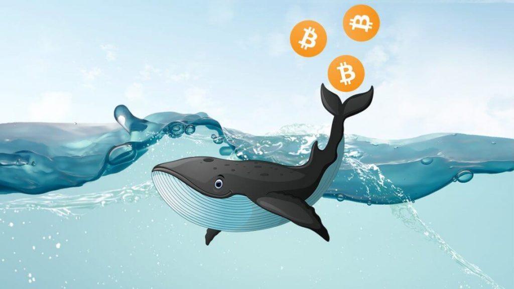 Ballena de Bitcoin